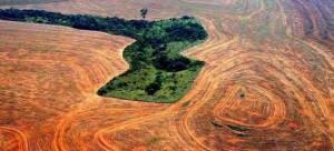 Selva amazonica arrasada