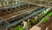 La CEOE exige facilitar más los contratos a tiempo parcial y aumentar las horas extra