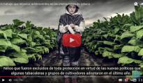 HRW - Plantaciones Tabaco EEUU