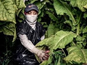 HRW - Un tabaco que intoxica a los menores en EEUU