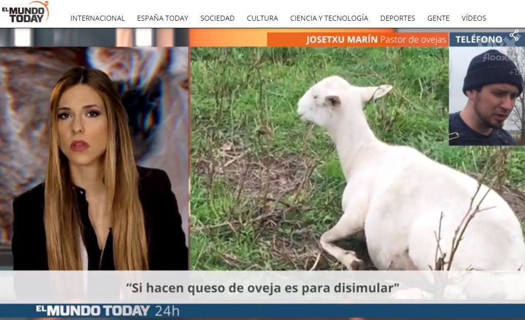 El Mundo Today-Ovejas